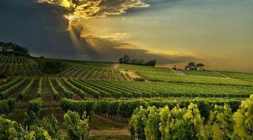 bergerac-wine-tours-e1365980176204