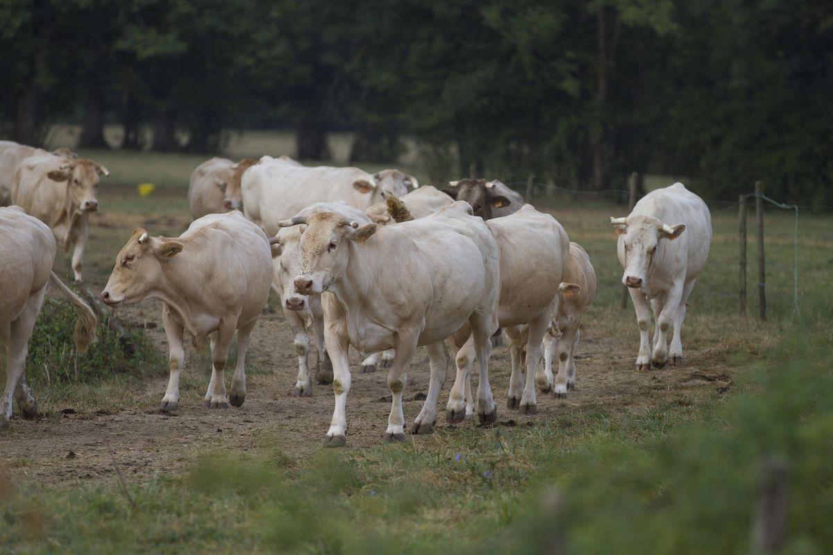 deplacement de troupeau