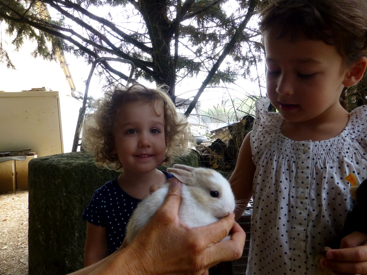 kids and bunnies 2