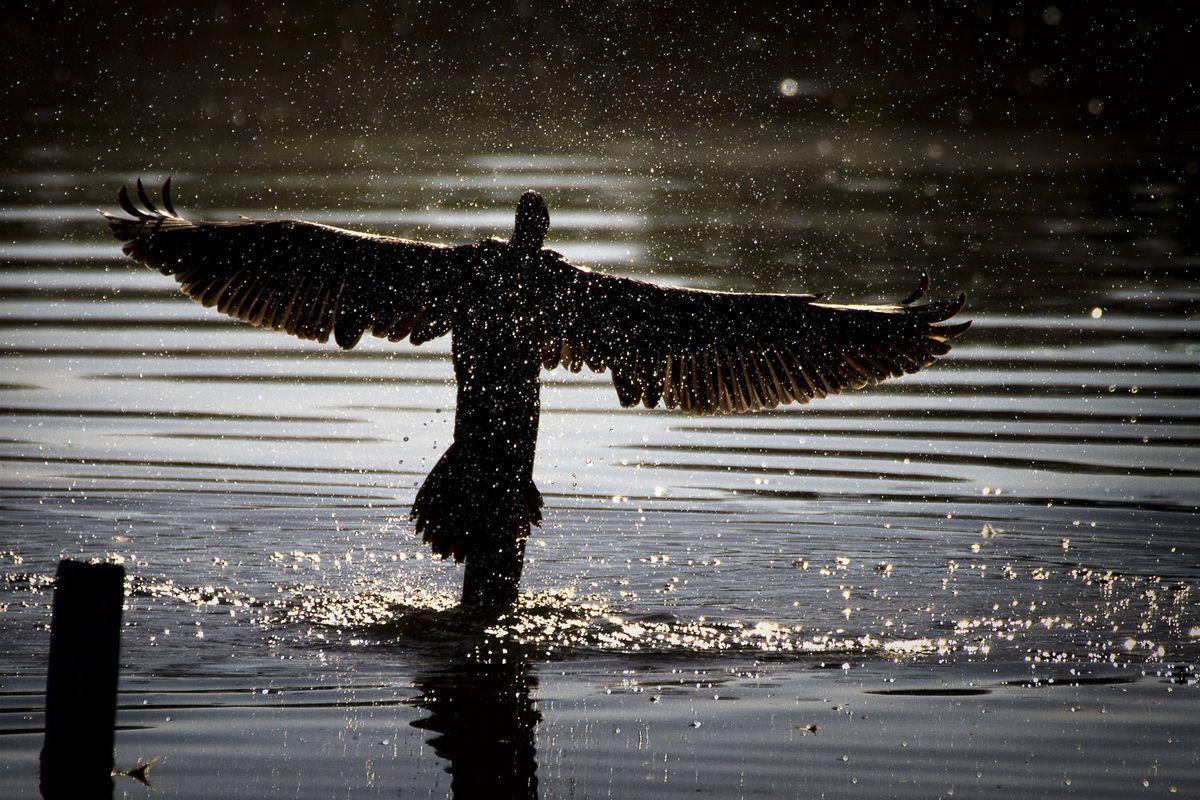 toutes ailes deployees