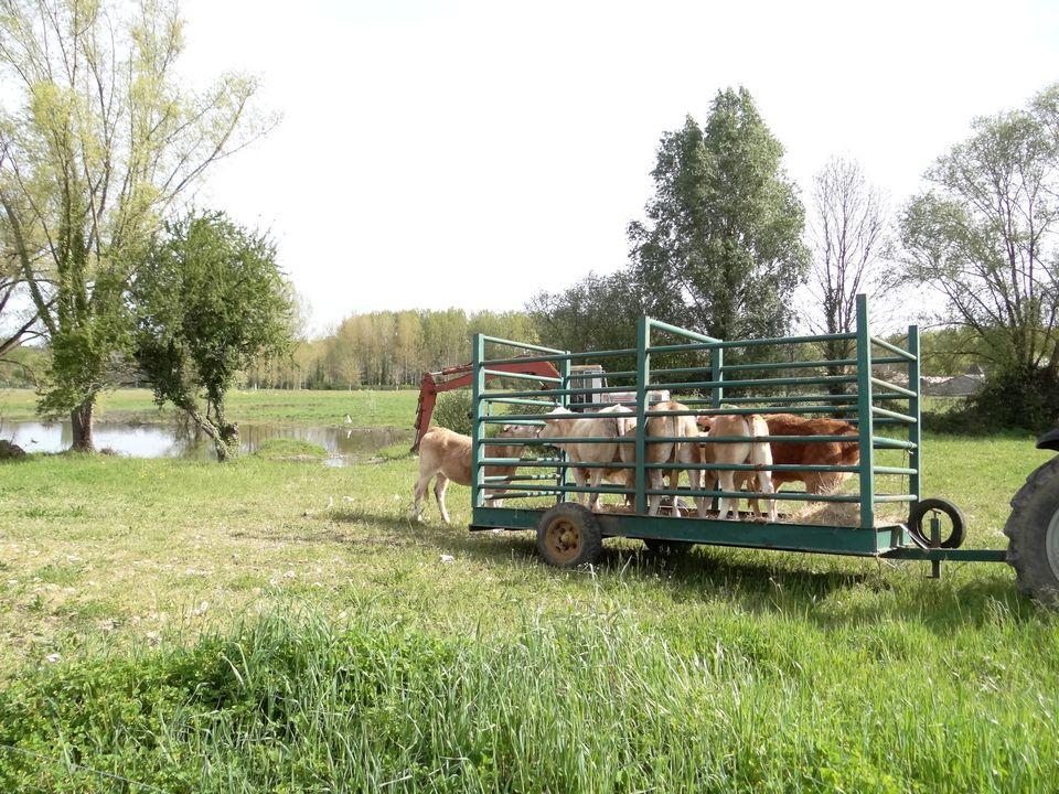 ferme lauzanac 4