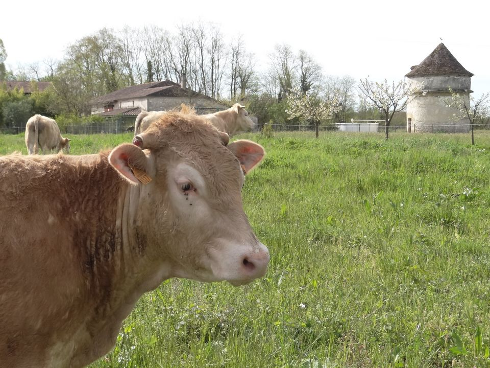 ferme lauzanac 8