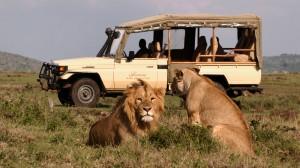 Safari Africain...